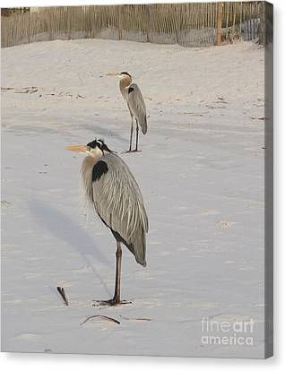 Heron Two Canvas Print