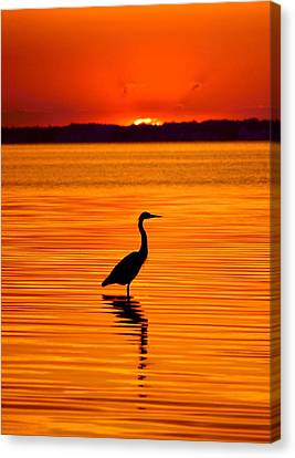 Heron With Burnt Sienna Sunset Canvas Print