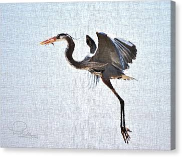 Canvas Print featuring the photograph Heron With Catch by Ludwig Keck