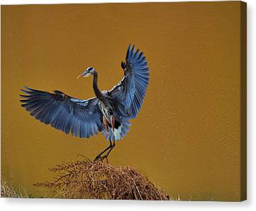 Heron With Wings Out - 9235 Canvas Print by Paul Lyndon Phillips