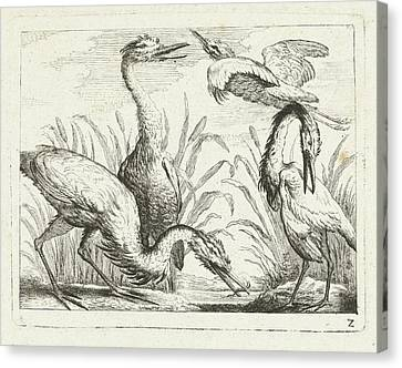 Heron Canvas Print - Herons At A Puddle, Peter Casteels IIi by Peter Casteels (iii)