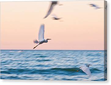 Herons Flying Over The Sea  Canvas Print