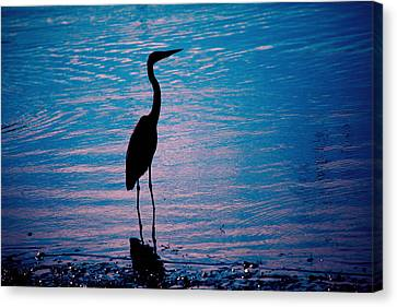 Herons Moment Canvas Print