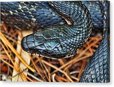 Herpetology - The Snake  Canvas Print by Paul Ward