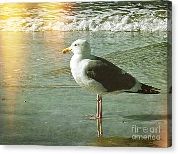 Herring Gull Watching Canvas Print
