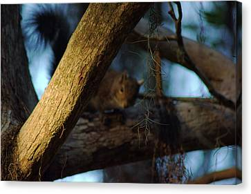 Canvas Print featuring the photograph He's Watching You by Daniel Woodrum