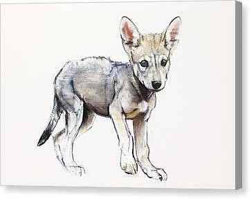 Hesitating Arabian Wolf Pup Canvas Print by Mark Adlington