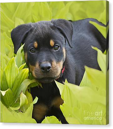 Hey Here I Am Canvas Print