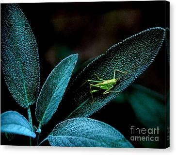 Canvas Print featuring the photograph Hey  I'm Trying To Hide by Debra Fedchin