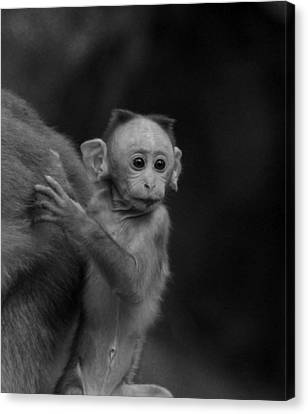 Hey Mom Look What Is There Canvas Print by Ramabhadran Thirupattur