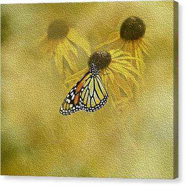 Hey Susan There Is That Butterfly Again Canvas Print by Diane Schuster