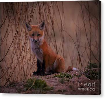 Hey There Canvas Print