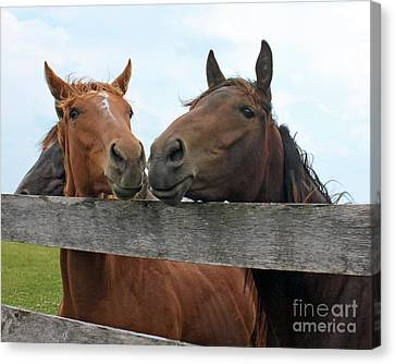 Hey You Come Here Canvas Print by Debbie Hart