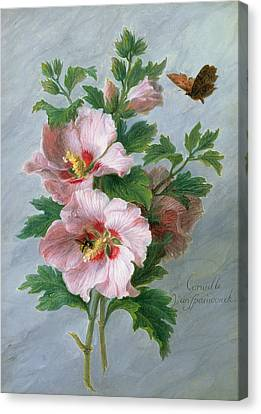 Hibiscus Against A Marble Ledge Canvas Print by Cornelis van Spaendonck