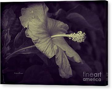 Hibiscus At Midnight Canvas Print by Deborah Benoit