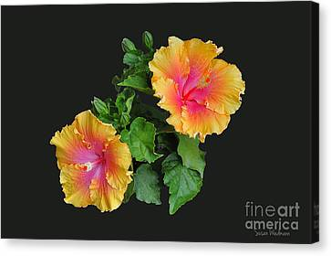 Canvas Print featuring the photograph Hibiscus Duo by Susan Wiedmann