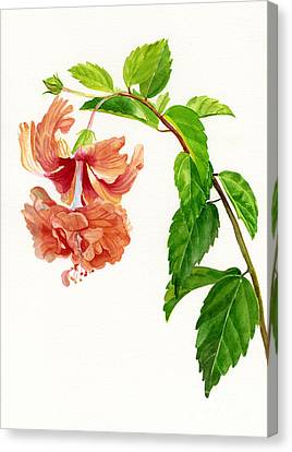 Peaches Canvas Print - Hibiscus El Capitolio Sport by Sharon Freeman