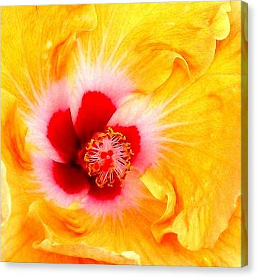 'hibiscus Explosion' Canvas Print
