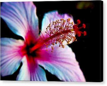 Canvas Print featuring the photograph Hibiscus Extending by Joseph Hollingsworth