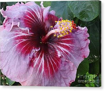 Canvas Print featuring the photograph Hibiscus In Hawaii by Laura  Wong-Rose