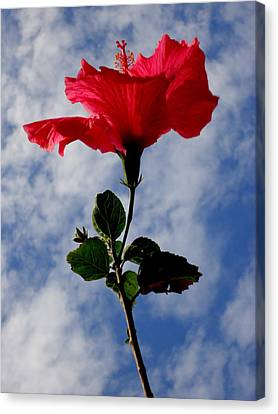 Hibiscus In The Sky Canvas Print by Peter Mooyman