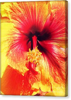 Hibiscus Photography Light Leaks Canvas Print by Chris Andruskiewicz