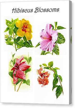 Hibiscus Poster With Script Canvas Print by Sharon Freeman