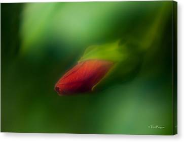 Canvas Print featuring the photograph Hibiscus Softly 1 by Travis Burgess