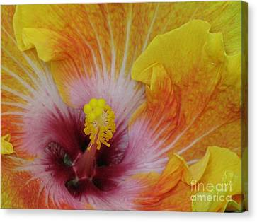 Canvas Print featuring the photograph Hibiscus by Tam Ryan