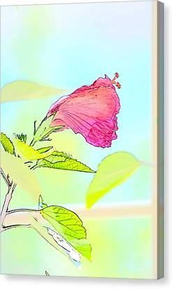 Hibiscus Unbloomed Canvas Print by Cathy Shiflett