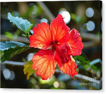 Hibiscus Veins Canvas Print by Lew Davis