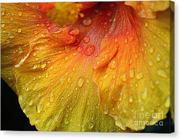 Canvas Print featuring the photograph Hibiscus Water Drops by Lisa L Silva