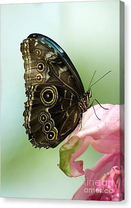 Canvas Print featuring the photograph Hidden Beauty Of The Butterfly by Debbie Green
