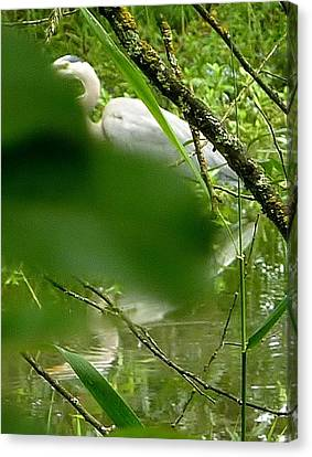 Canvas Print featuring the photograph Hidden Bird White by Susan Garren