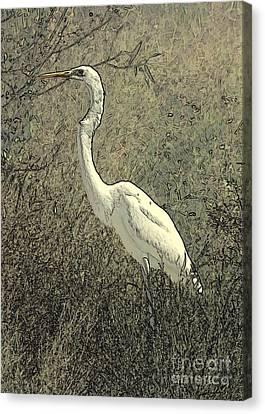Hidden Egret Canvas Print by Carol Groenen