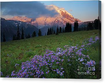Aster Canvas Print - Hidden Majesty by Mike  Dawson