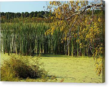 Waterscape Canvas Print - Hidden Marsh II by Suzanne Gaff