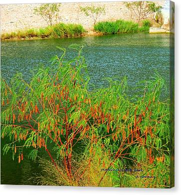 Canvas Print featuring the photograph Hidden Oasis by David  Norman