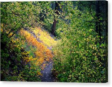 Hidden Trail Canvas Print