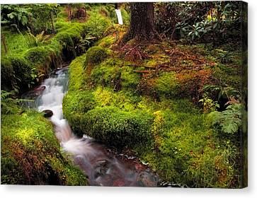 Hidden Woodland Corner. Benmore Botanical Garden. Scotland Canvas Print by Jenny Rainbow