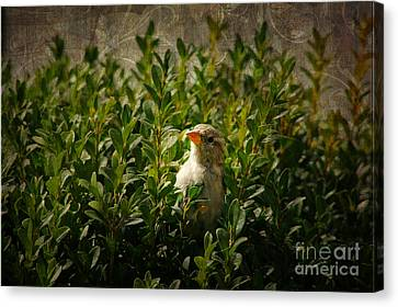Canvas Print featuring the photograph Hide And Seek by Mariola Bitner