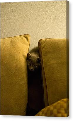 Hide And Seek Canvas Print by Matt Radcliffe