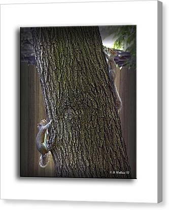 Hide And Seek Squirrels Canvas Print by Brian Wallace