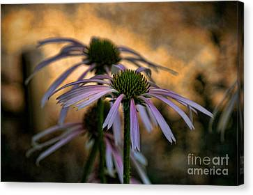 Hiding In The Shadows Canvas Print by Peggy Hughes