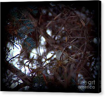 Hiding In The Trees Canvas Print