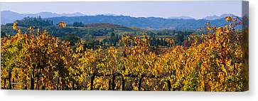 High Angle View Of A Field, Alexander Canvas Print by Panoramic Images