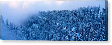 High Angle View Of A Forest, Mt Baker Canvas Print