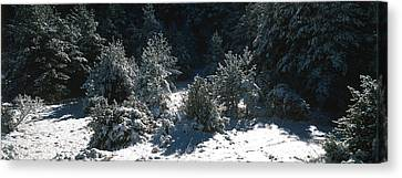 High Angle View Of A Snow Covered Fir Canvas Print by Panoramic Images