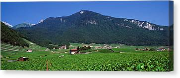 High Angle View Of A Vineyard, Valais Canvas Print