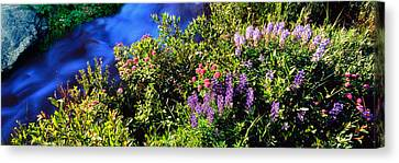 High Angle View Of Lupine And Spirea Canvas Print